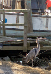 "A Heron Named ""Gus"""