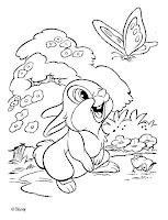 conejo Tambor