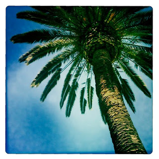 California palm tree iPhone photography apps hipstamatic