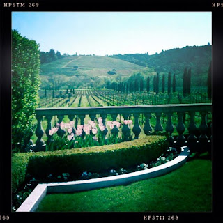Ferrari-Carano winery vineyards tulips iphone iphoneography hipstamatic