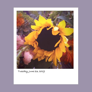 iPhone polaroid, sunflowers, flowers