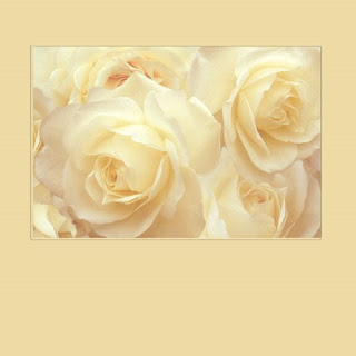 white roses, canvas wrapped giclee print