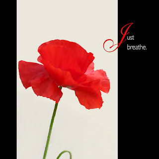 Just breathe, red poppy, canvas wrapped print