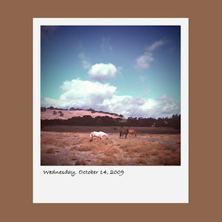iPhone polaroid, clouds, horses, Palo Alto California