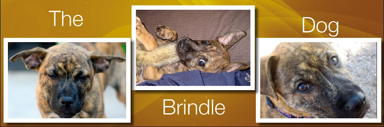The Brindle Dog