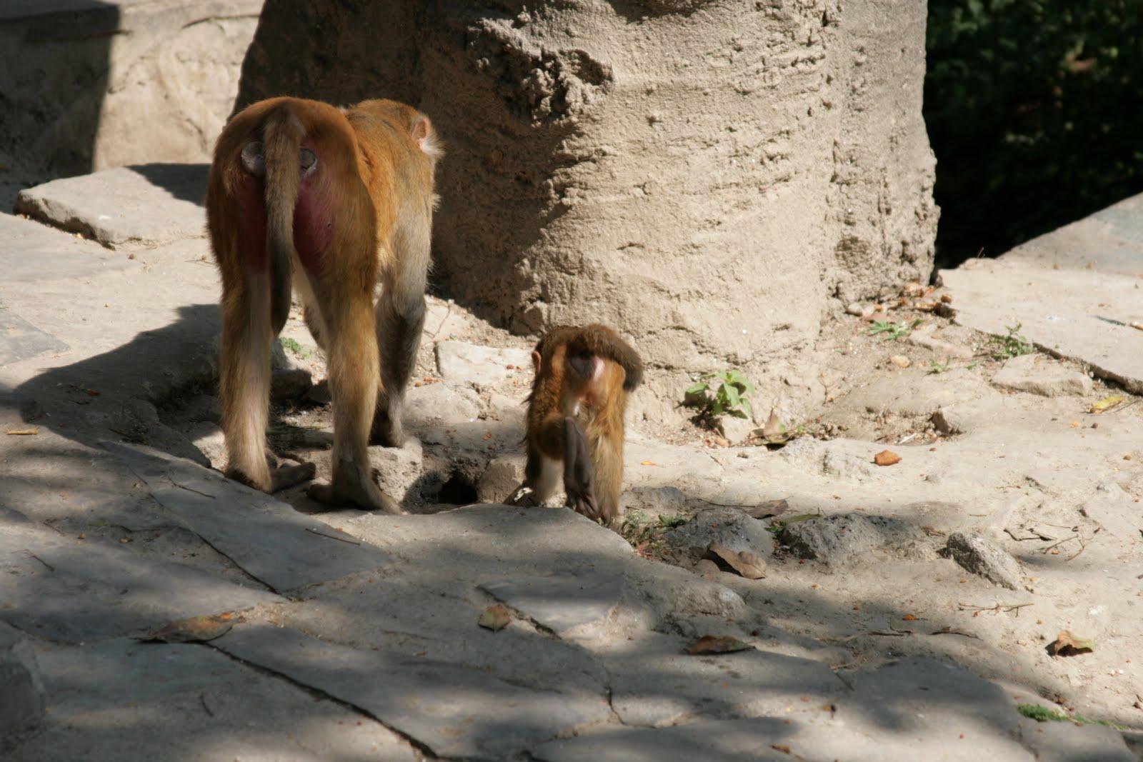 Секс в джунглях 2 индиана мак 29 фотография