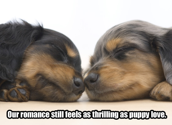 I Love You Puppies high resolution widescreen