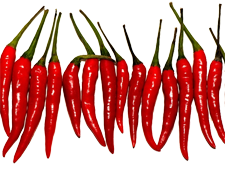 Spicy Chilli's