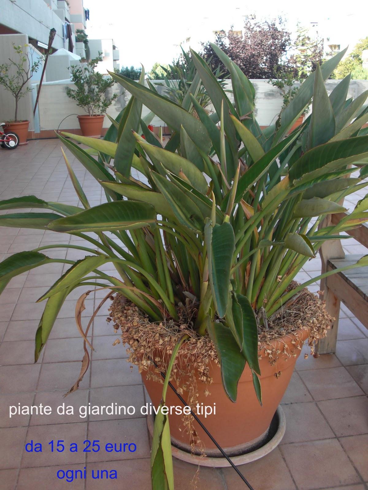 Vendesi seminuovi bari piante da giardino diversi tipi for Vendita piante da giardino