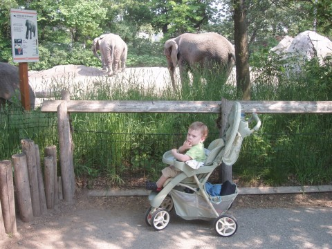 [Unimpressed+with+the+elephants]