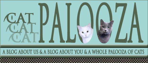 Cat Palooza