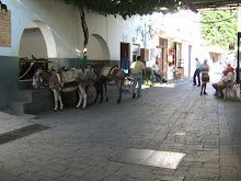 Donkeys in Lindos