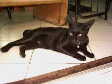 Gatos de Thailandia