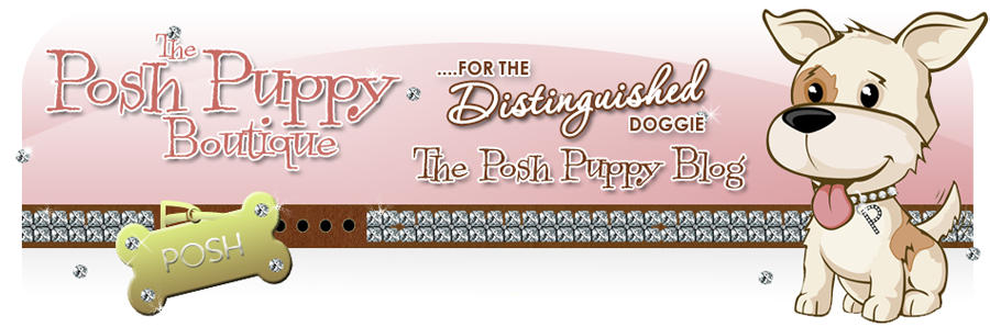 Dog Boutique, Designer Dog Clothing and Accessories for your Dog