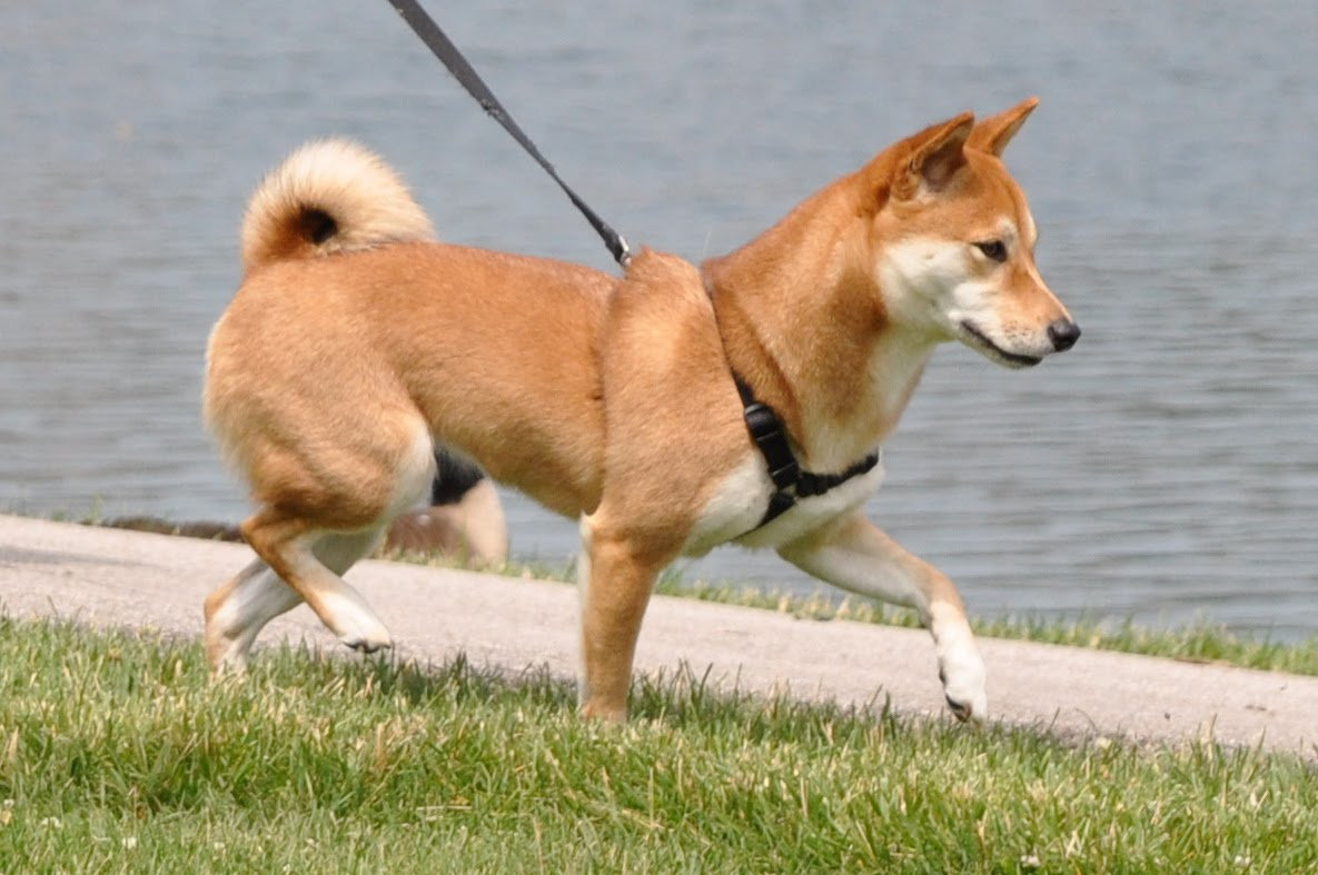 Can I Take Dog From Shelter For Walk
