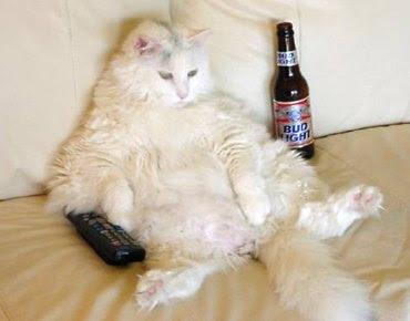 couch-potato-cat.jpg
