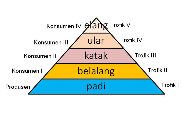makanan di atas jika dibuat piramida makanan adalah sebagai berikut