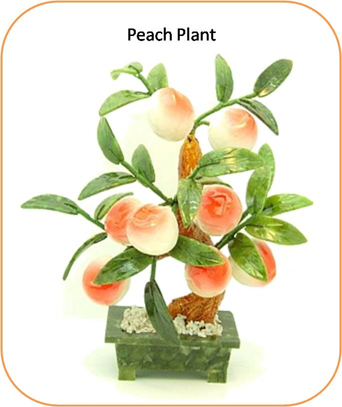 peach plant bears a deep symbolic meaning every part of this plant ...