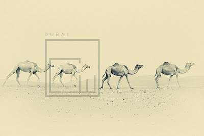 The Classic Beauty Of Dubai