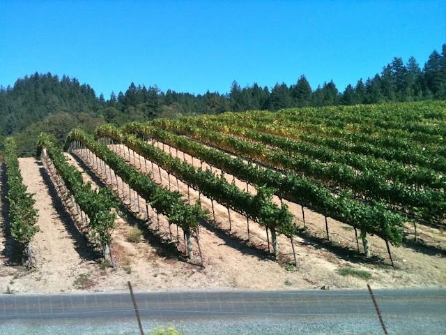 Korbel has a vineyard just outside of Guerneville.