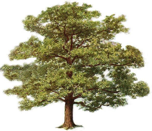 clip art tree. clip art tree outline. clip