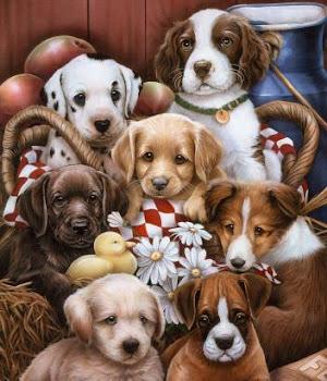 Clases para cachorros ¡anotaros!