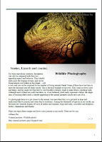 wildlife photography | sample picture or image of a publication of photos on Lizards snakes and similar animals