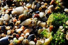 Piedras de mar.