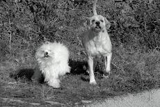 Rufo y Govi.