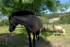 Caballo, rufo y ovejas.