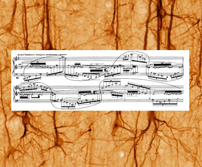 GAZPACHOT: Chord progressions and the spinal cord...