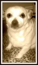 R I P   Sally                 August 20, 1996 - February 22, 2009