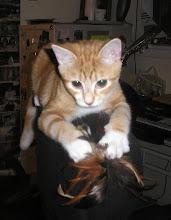 """Jack """"the cat"""" Parker"""