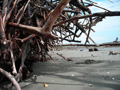 Salvemos el manglar de Majagual