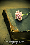 book with resting carnation