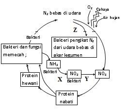 Prediksi un unas uas biologi 2011 biohikmah berdasarkan gambar yang ditunjuk x y adalah proses ccuart Image collections