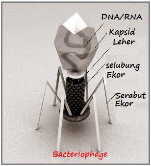 Materi Tentang Virus Biohikmah