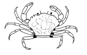 Crustacea anomalia