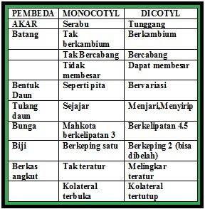 Perbedaan Tumbuhan Monokotil - Dikotil | PAS Collage ...