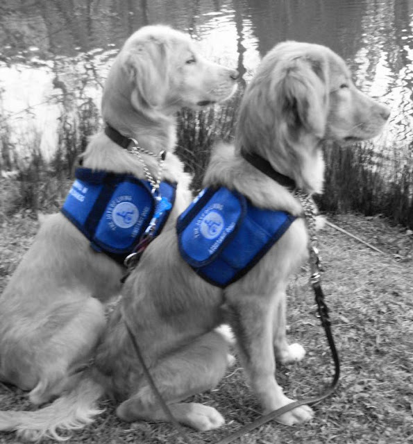 Eva and Eclipse in black and white. They are sitting right next to each other, Eclipse slightly behind his sister, furthest away from the camera. Their right sides are facing the camera and they are looking out over a lake. Their ears are perked and they are at attention. Their jackets are still in color, a very rich dark blue