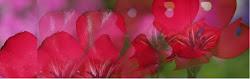 Blommor från sommaren