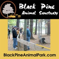 Black Pine Animal Sanctuary