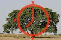 técnica do relógio utilizando uma árvore
