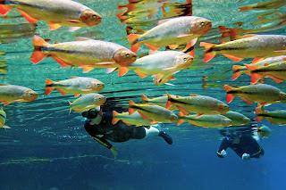 Mergulhando com peixes no Rio Olho D'Água em Jardim, MS
