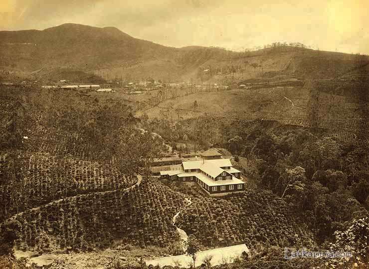 One of the first tea estates