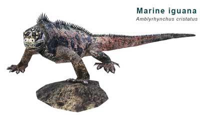 Marine Iguana Papercraft