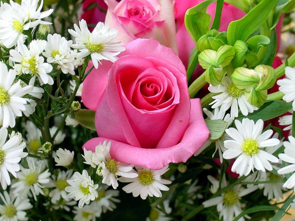 Petali al vento buon compleanno mamma for Fiori primaverili da giardino