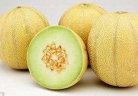Budidaya Melon kuning