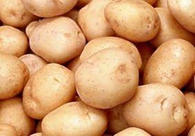 budidaya kentang organik