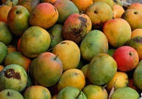 Budidaya Mangga apel